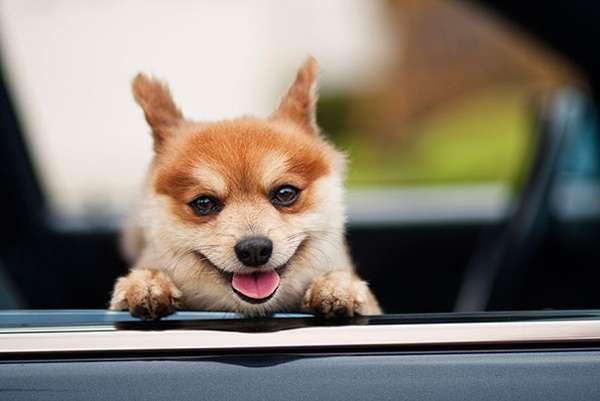 音画影视区 图片大全 → 动物也会笑   此主题相关图片如下:mmexport